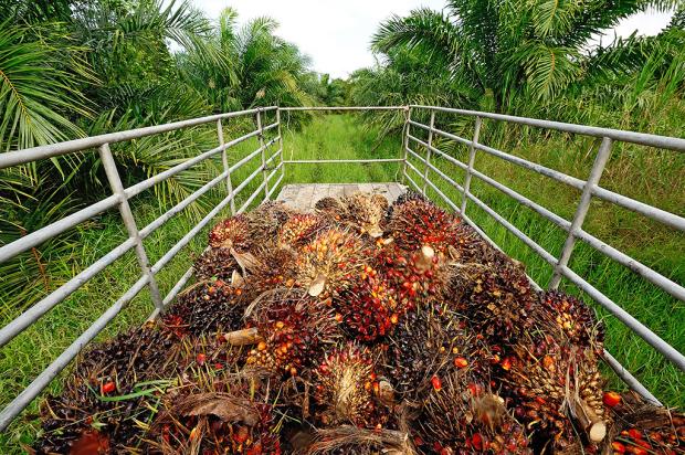 palmolja